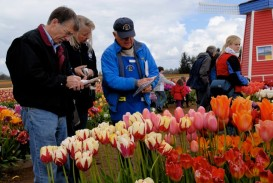 Tulip Fest in Woodburn