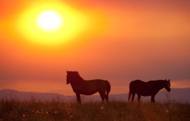Ranch horse sunset