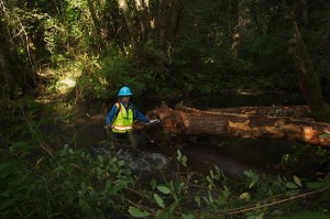Roslyn Gray, P.E. NOrth Coast Basin Engineer, directing woody debris placement in the Clatskanie, River; photo by Jan Jackson
