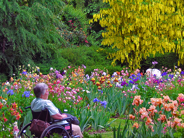 Schreineru0027s Iris Gardens, 3625 Quinsby Rd NE, Salem, OR 97303; Photo  Courtesy