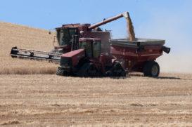wheat harvest near Dufur, Wasco County