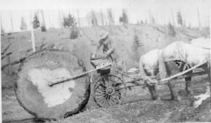 Logging in Rainier, Oregon 1920s.